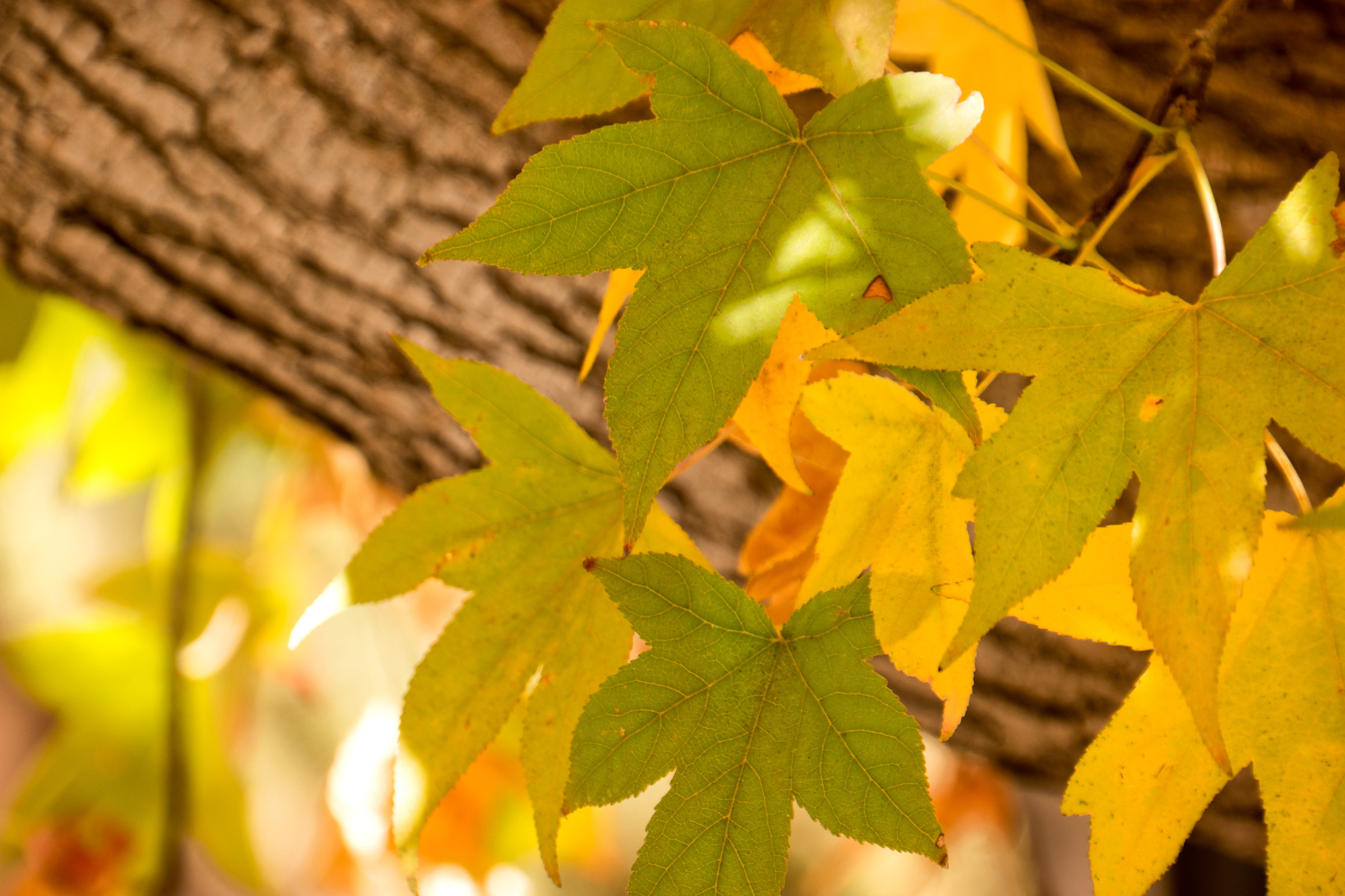 Wasim-Muklashy-Photography_Sedona_Arizona_Autumn-Leaves.jpg