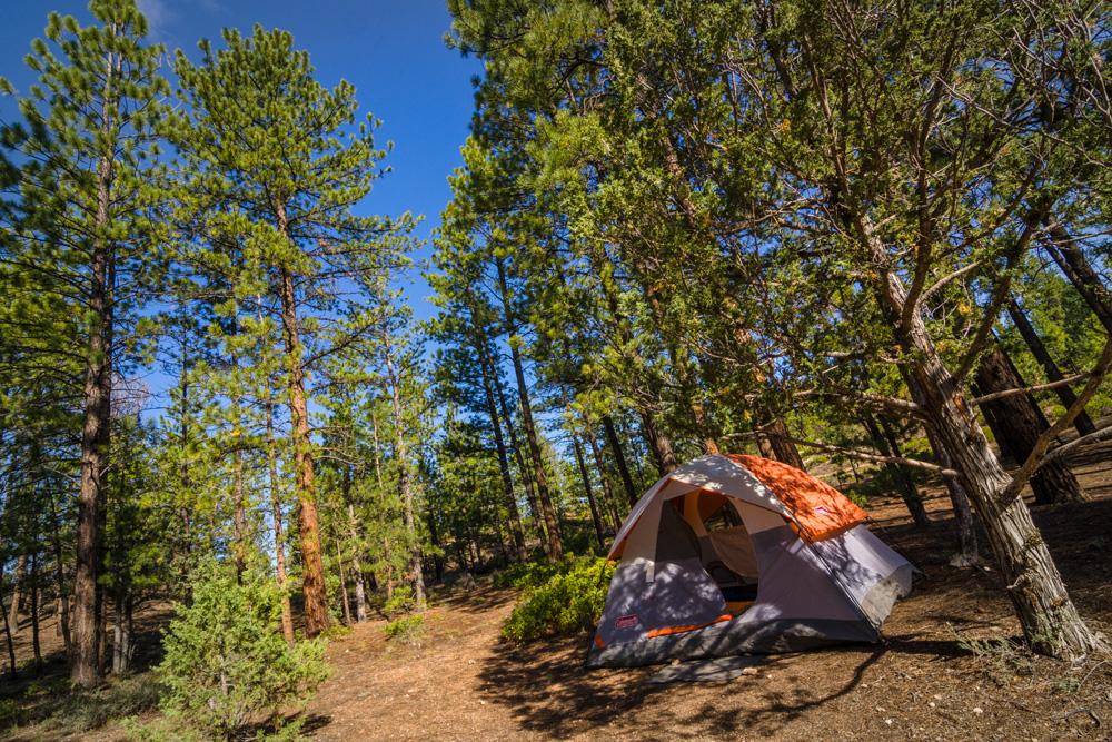 Wasim Muklashy Photography_Bryce Canyon National Park_Utah_02.jpg