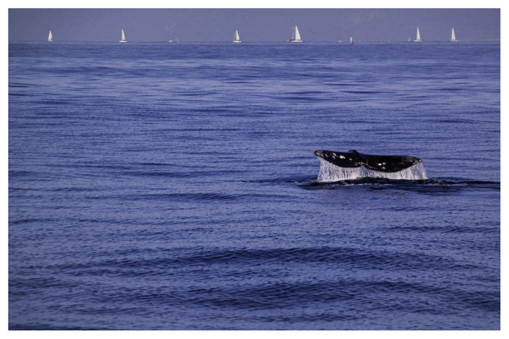 Wasim Muklashy Photography_Whale Watching_Ventura_California_Samsung NX30_06.jpg