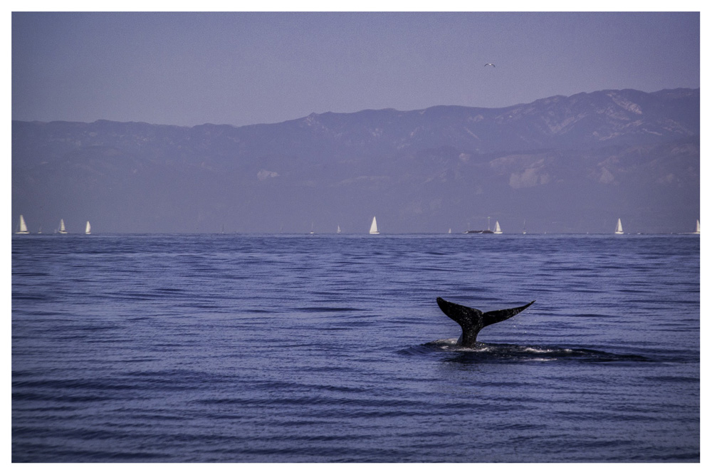 Wasim Muklashy Photography_Whale Watching_Ventura_California_Samsung NX30_08.jpg