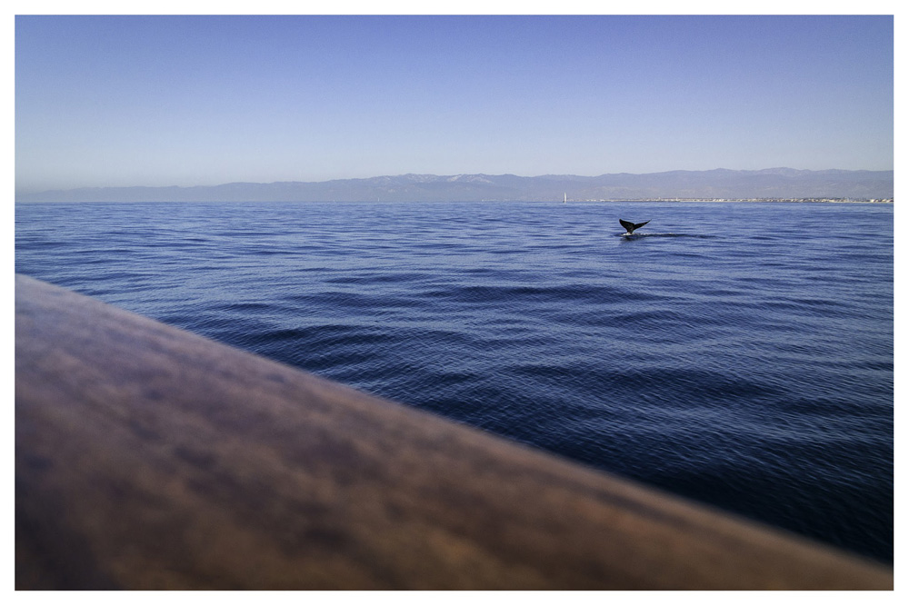 Wasim Muklashy Photography_Whale Watching_Ventura_California_Samsung NX30_11.jpg