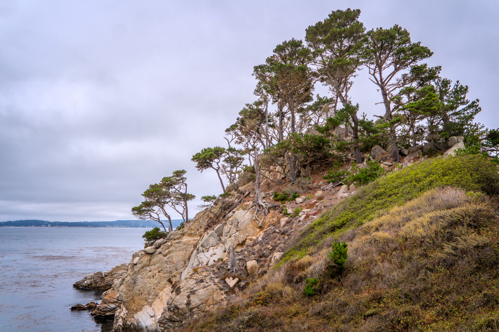Wasim Muklashy Photography_Big Sur_California_Part 3_18.jpg