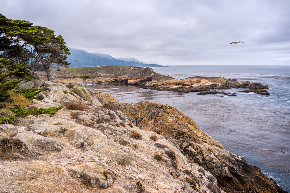 Wasim Muklashy Photography_Big Sur_California_Part 3_21.jpg