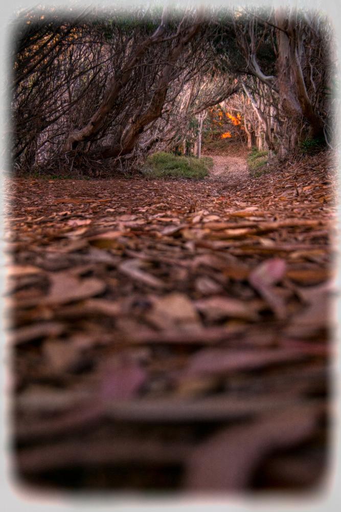 Wasim Muklashy Photography_Big Sur_California_Part 2_10.jpg
