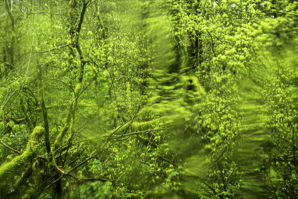 wasim muklashy photography_pacific_northwest_samsung nx30_mirrorless_36.jpg