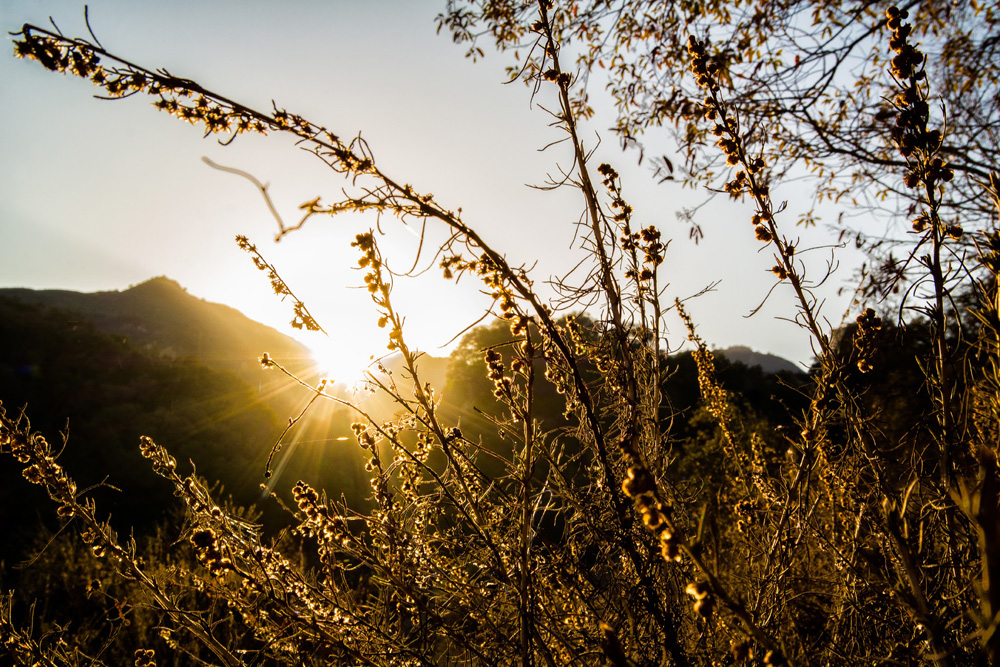Wasim Muklashy Photography_Hiking_Topanga Canyon_California_05.jpg