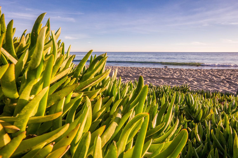 Wasim Muklashy Photography_Malibu_California_Airstream_06.jpg