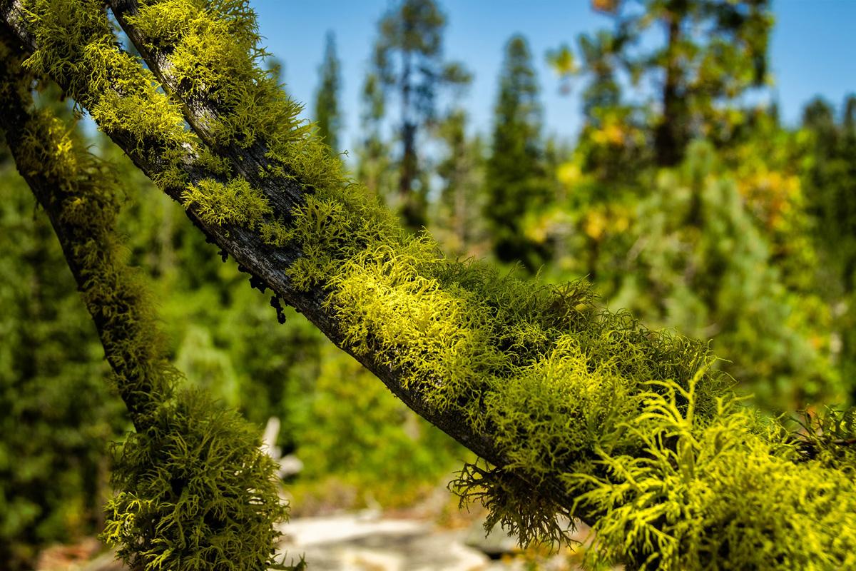 Wasim-Muklashy-Photography_Far-Meadow_Yosemite_California_33.jpg