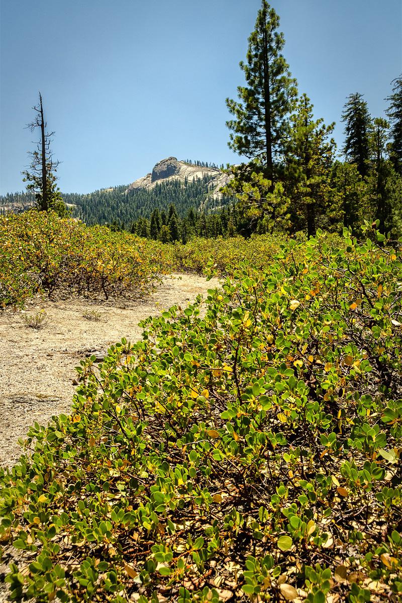 Wasim-Muklashy-Photography_Far-Meadow_Yosemite_California_32.jpg