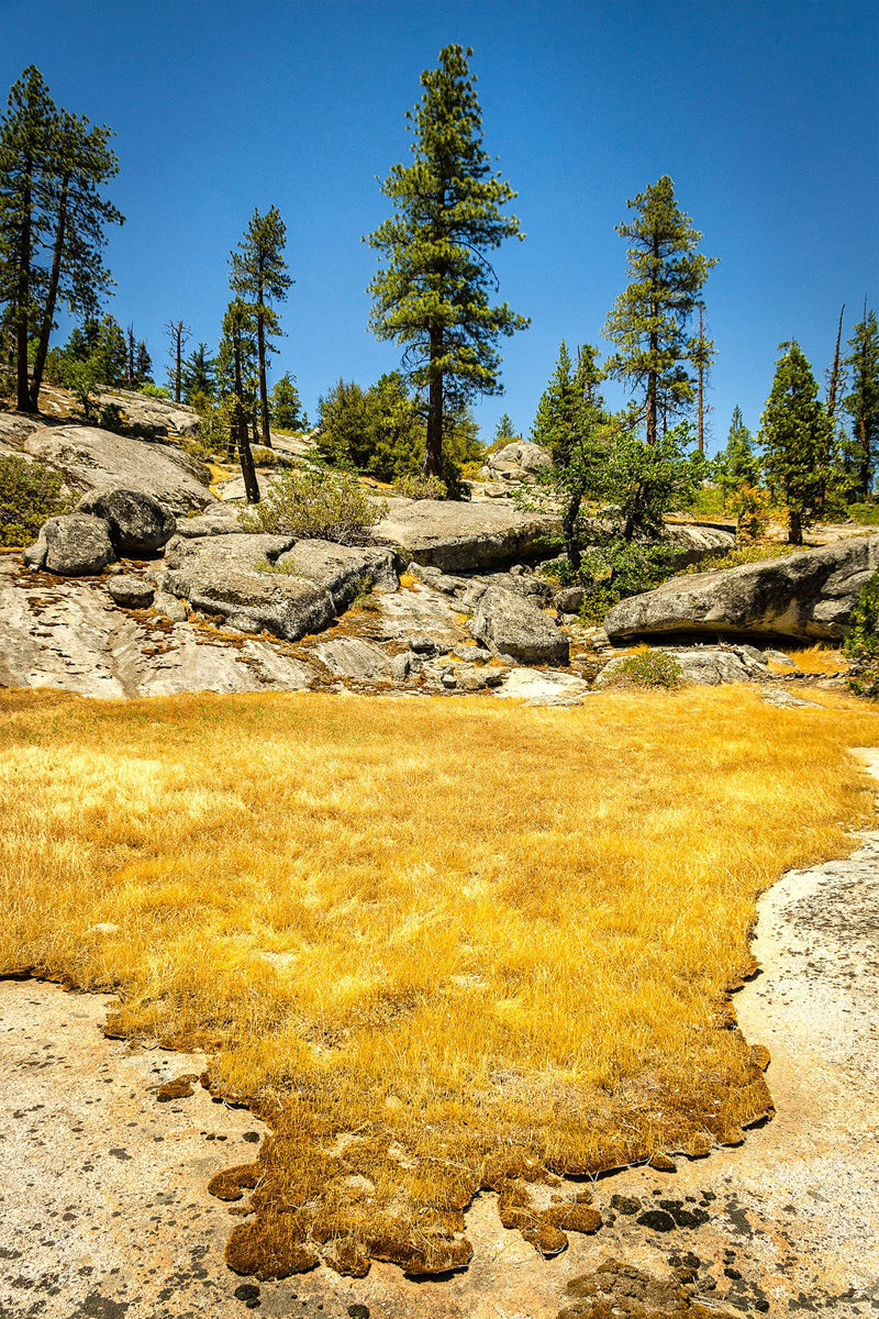 Wasim-Muklashy-Photography_Far-Meadow_Yosemite_California_35.jpg