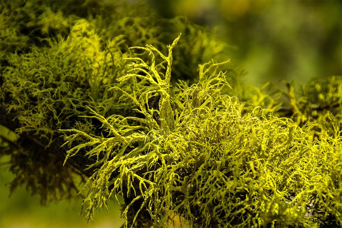 Wasim-Muklashy-Photography_Far-Meadow_Yosemite_California_34.jpg
