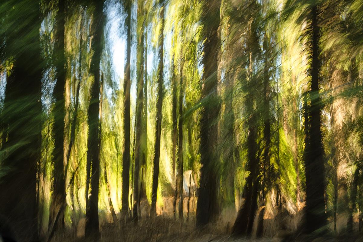 Wasim-Muklashy-Photography_Far-Meadow_Yosemite_California_41.jpg