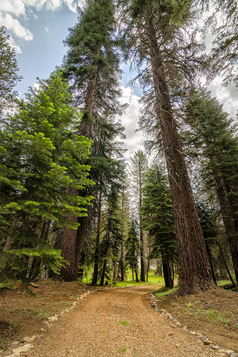 Wasim-Muklashy-Photography_Far-Meadow_Yosemite_California_20.jpg