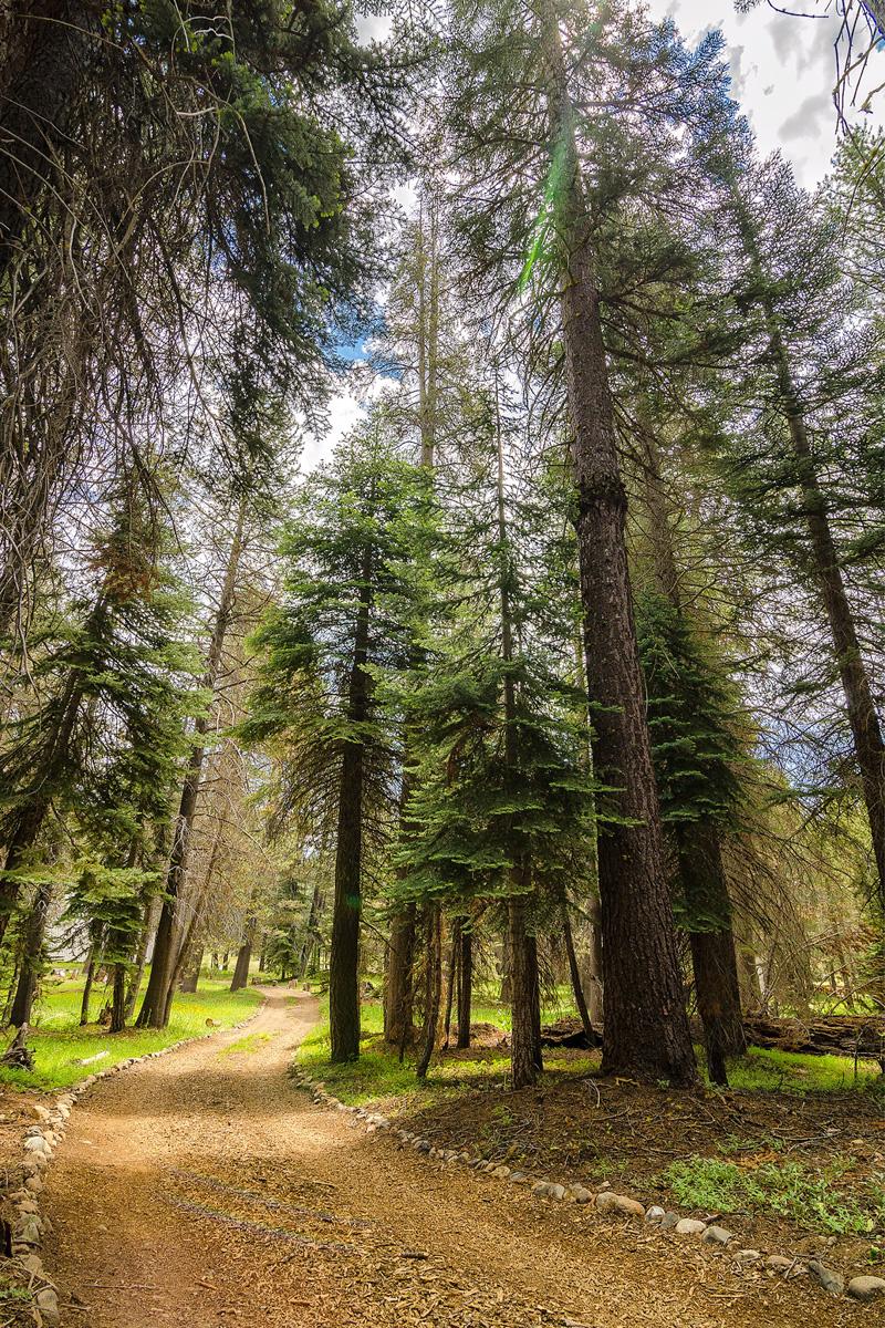 Wasim-Muklashy-Photography_Far-Meadow_Yosemite_California_21.jpg