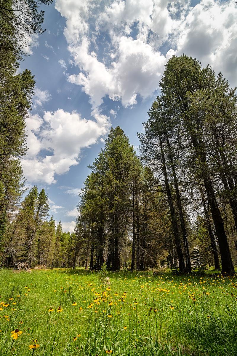 Wasim-Muklashy-Photography_Far-Meadow_Yosemite_California_22.jpg