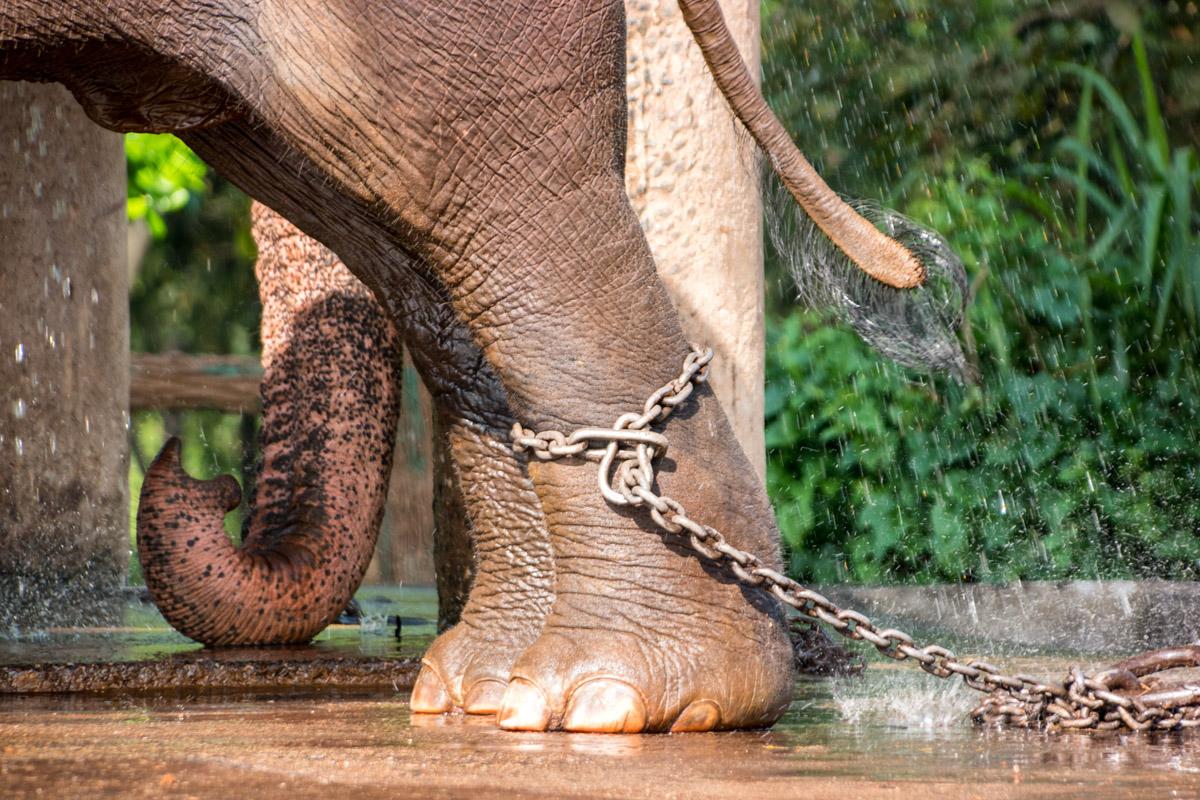 Wasim Muklashy Photography_Kandy_Sri Lanka_February 2015_Samsung NX1_18-200mm_02.jpg