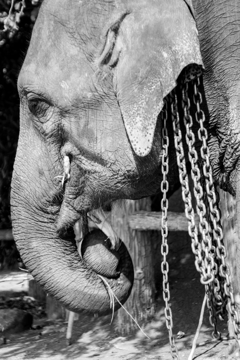 Wasim Muklashy Photography_Kandy_Sri Lanka_February 2015_Samsung NX1_18-200mm_04.jpg
