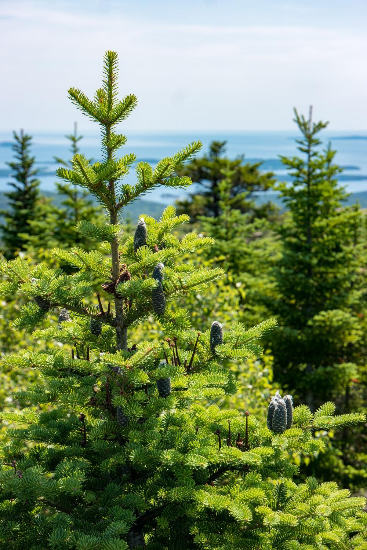 Wasim Muklashy Photography_Samsung NX500_Acadia National Park_Maine_ SAM_2770.jpg