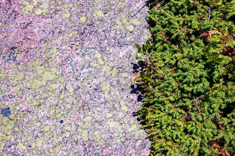 Wasim Muklashy Photography_Samsung NX500_Acadia National Park_Maine_ SAM_2755.jpg