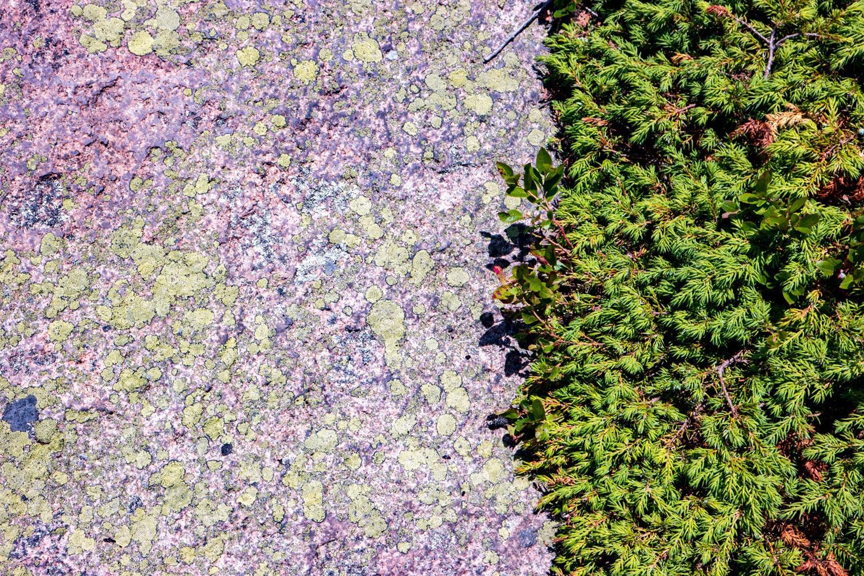 Wasim Muklashy Photography_Samsung NX500_Acadia National Park_Maine_ SAM_2755-2.jpg