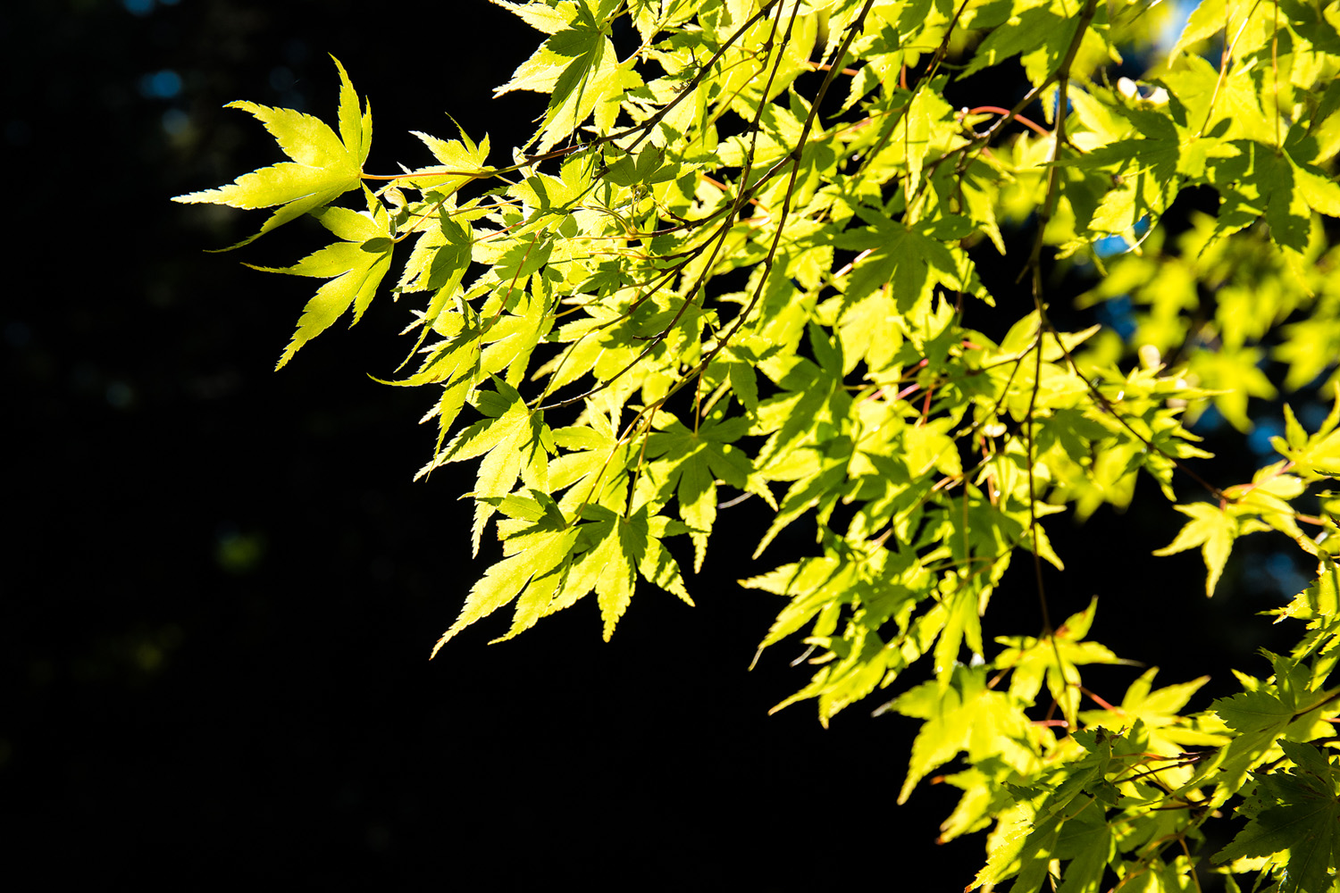 Wasim Muklashy Photography_Samsung NX1_Japanese Garden_Portland_Oregon_ SAM_6450-Edit-3.jpg