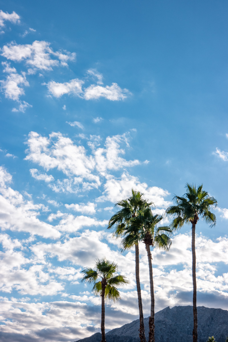 Wasim Muklashy Photography_Samsung NX500_Palm Desert_California_-SAM_4528-Edit.jpg