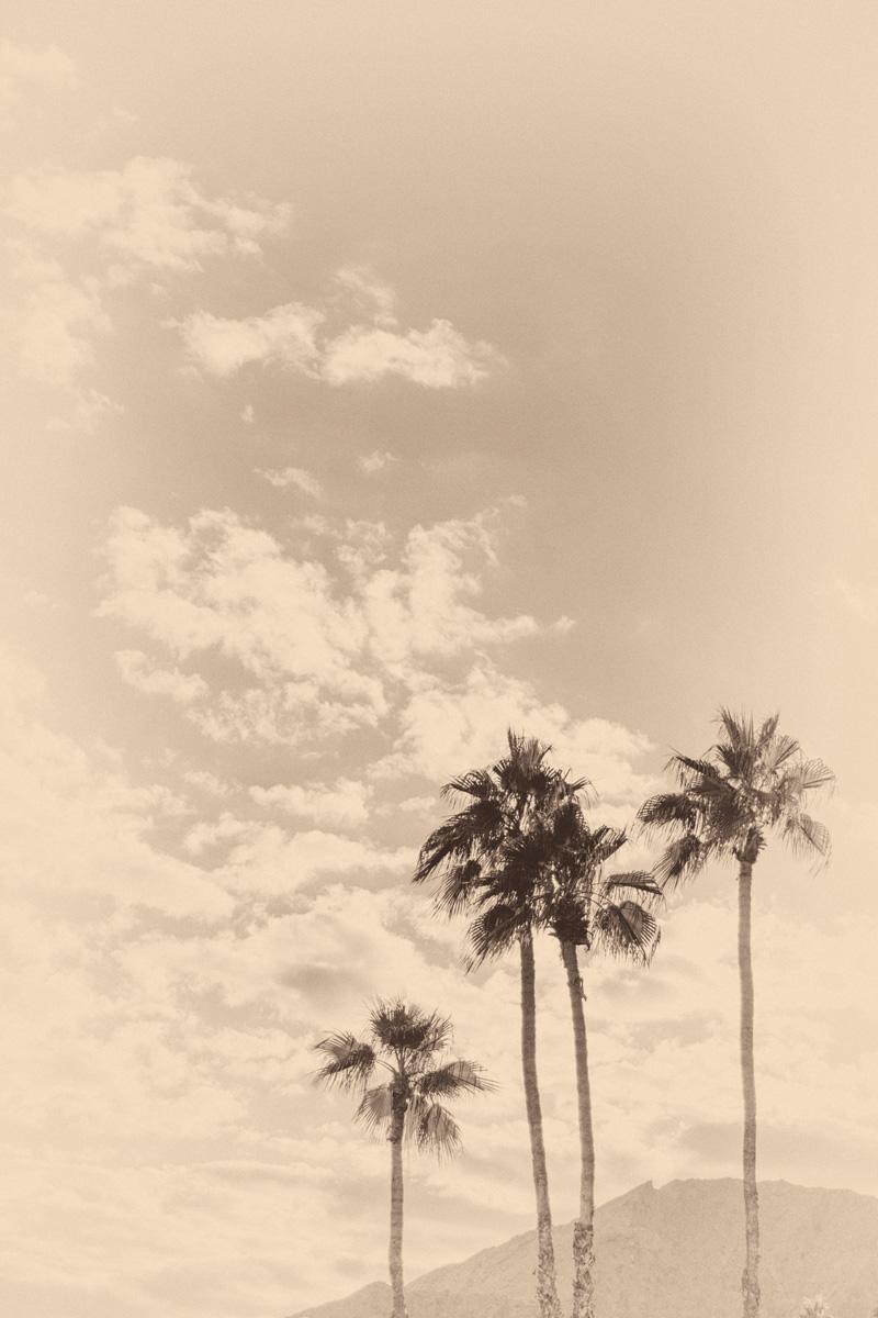 Wasim Muklashy Photography_Samsung NX500_Palm Desert_California_Filter_-SAM_4528-Edit.jpg