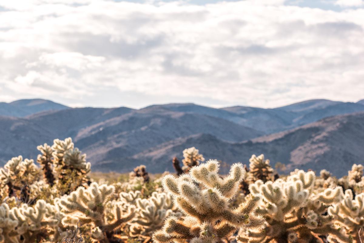 Wasim Muklashy Photography_Samsung NX1_Joshua Tree National Park_California_-SAM_2111-Edit.jpg