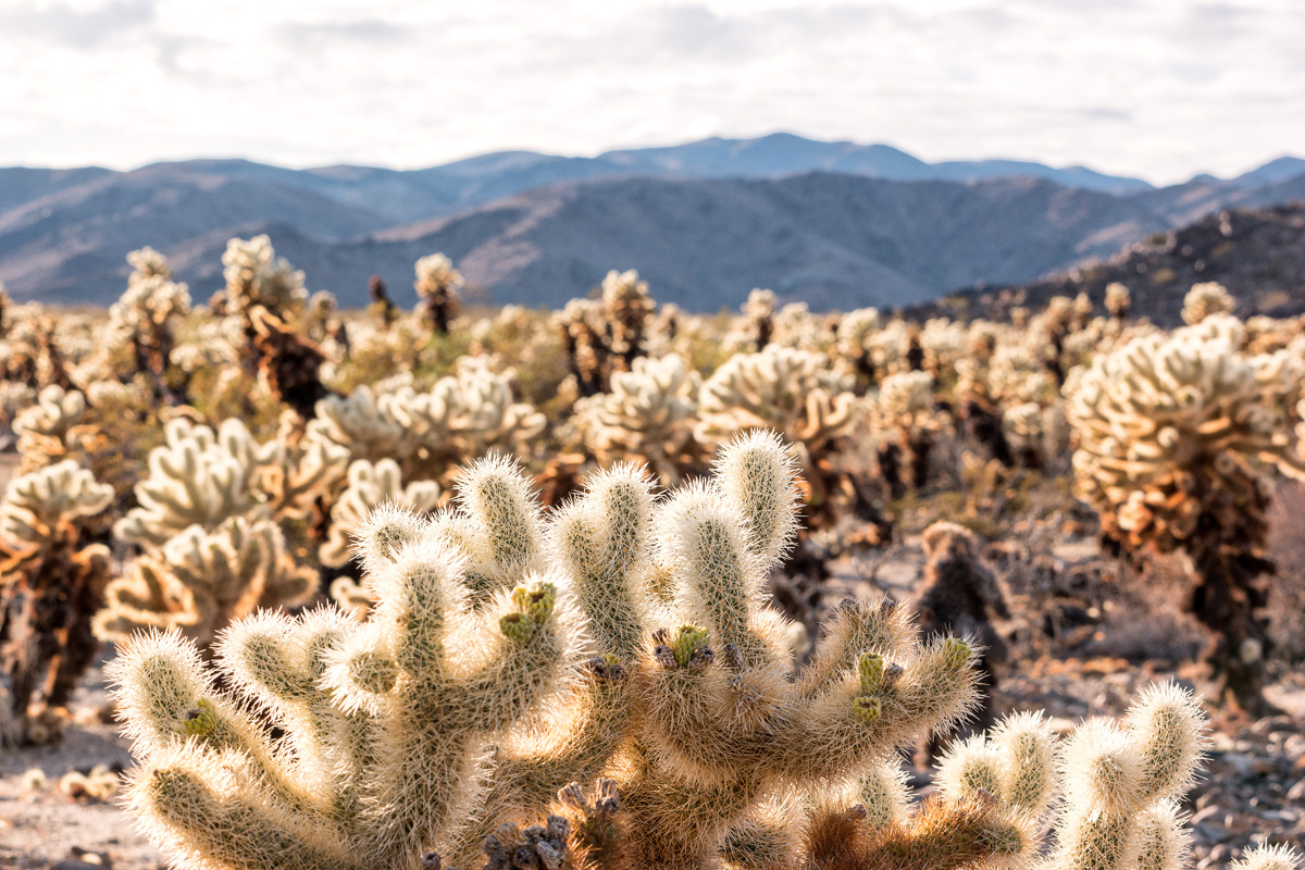 Wasim Muklashy Photography_Samsung NX1_Joshua Tree National Park_California_-SAM_2118-Edit.jpg