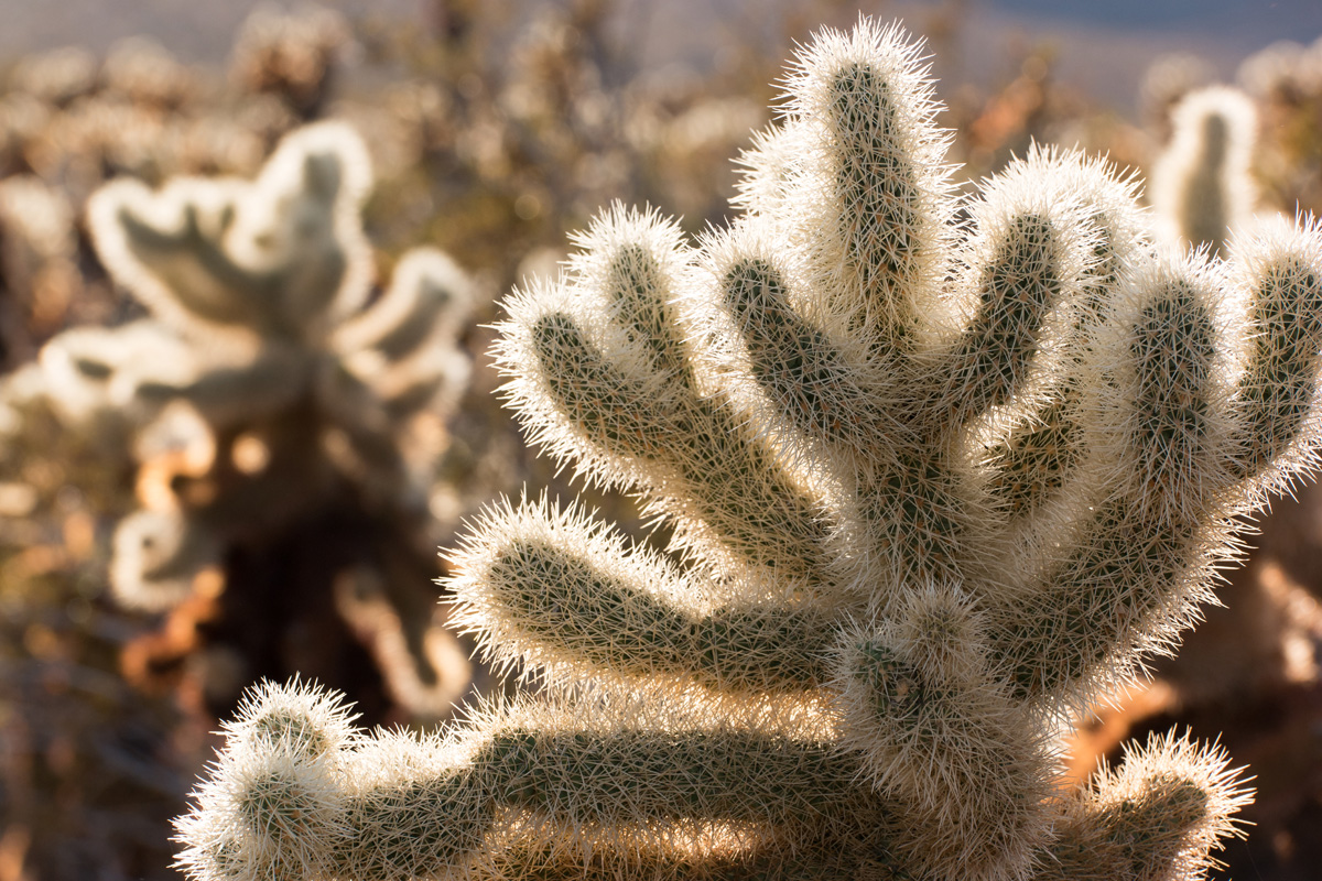 Wasim Muklashy Photography_Samsung NX1_Joshua Tree National Park_California_-SAM_2122.jpg