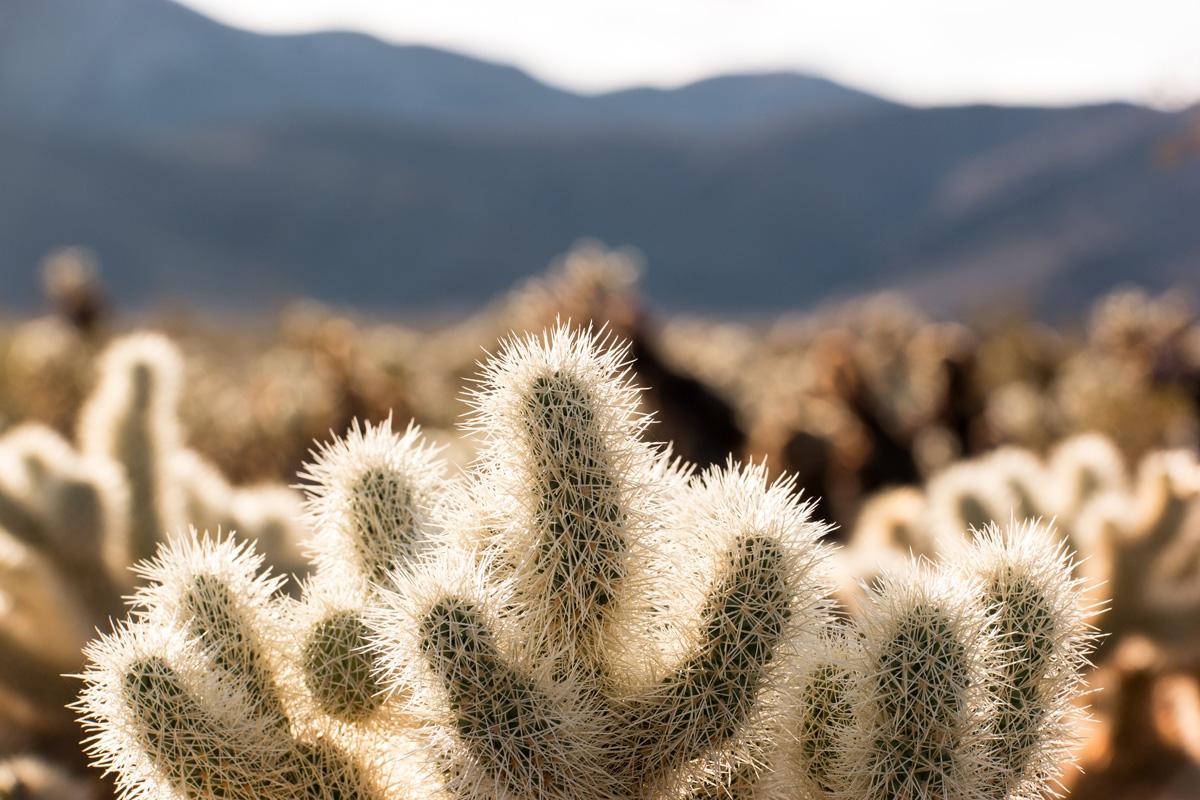Wasim Muklashy Photography_Samsung NX1_Joshua Tree National Park_California_-SAM_2129.jpg