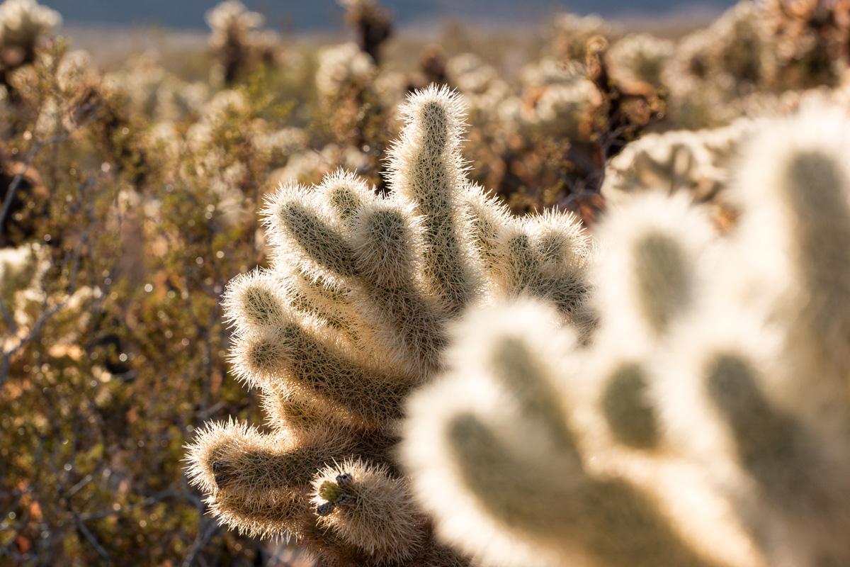 Wasim Muklashy Photography_Samsung NX1_Joshua Tree National Park_California_-SAM_2131.jpg