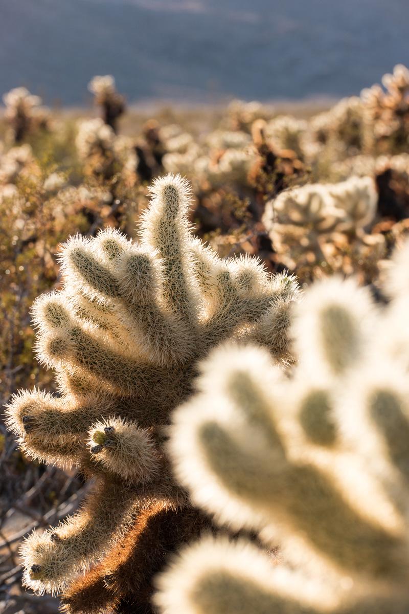 Wasim Muklashy Photography_Samsung NX1_Joshua Tree National Park_California_-SAM_2135.jpg