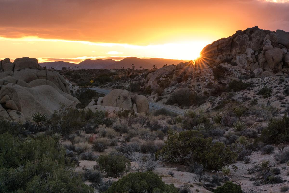 Wasim Muklashy Photography_Samsung NX1_Joshua Tree National Park_California_-SAM_2186-Edit.jpg