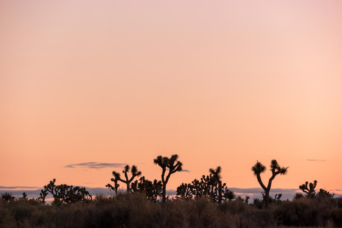 Wasim Muklashy Photography_Samsung NX1_Joshua Tree National Park_California_-SAM_2211.jpg