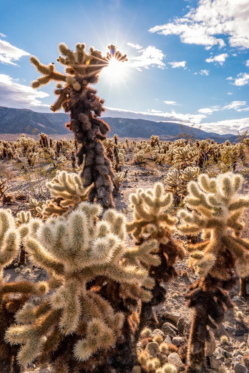 Wasim Muklashy Photography_Samsung NX1_Palm Desert_California_-SAM_2105-Edit.jpg