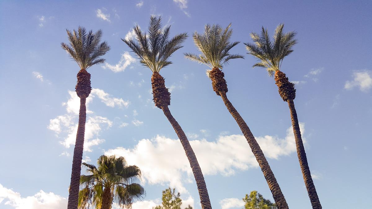 Wasim Muklashy Photography_Samsung Galaxy Note 5_Joshua Tree National Park_California_-20151126_144050.jpg