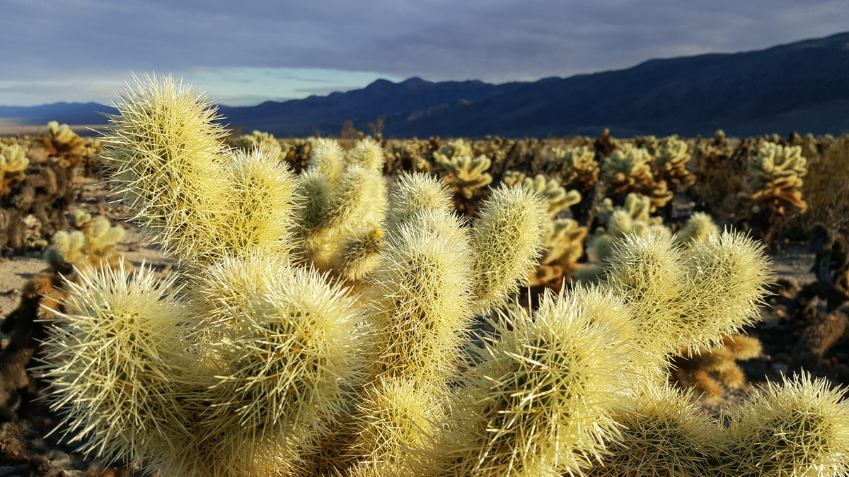 Wasim Muklashy Photography_Samsung Galaxy Note 5_Joshua Tree National Park_California_-20151127_152249.jpg
