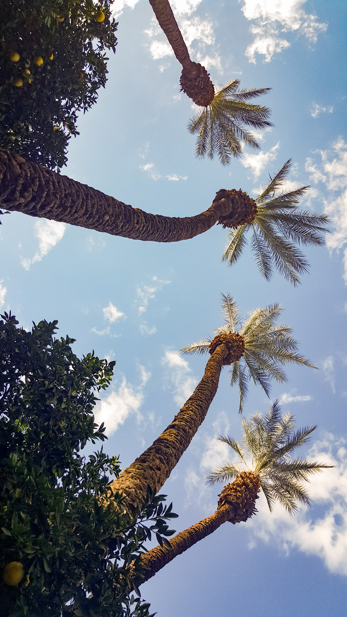 Wasim Muklashy Photography_Samsung Galaxy Note 5_Palm Desert_California_-20151126_144251.jpg