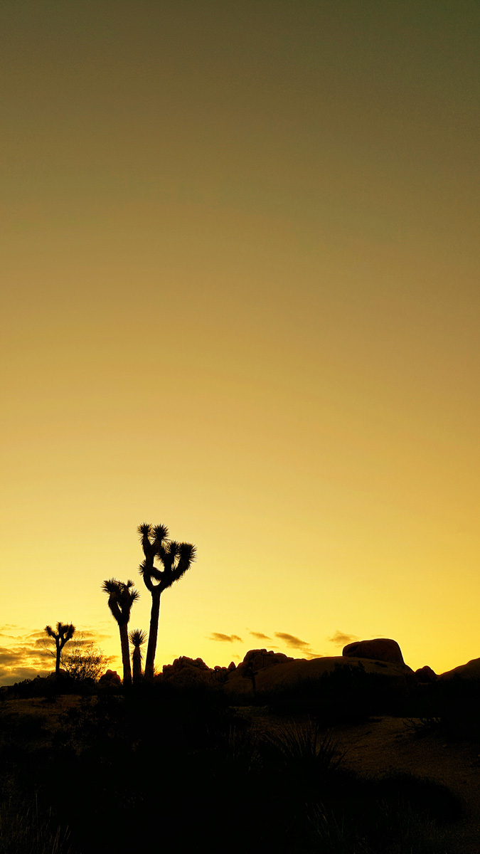Wasim Muklashy Photography_Samsung Galaxy Note 5_Palm Desert_California_-20151127_163525-03.jpg