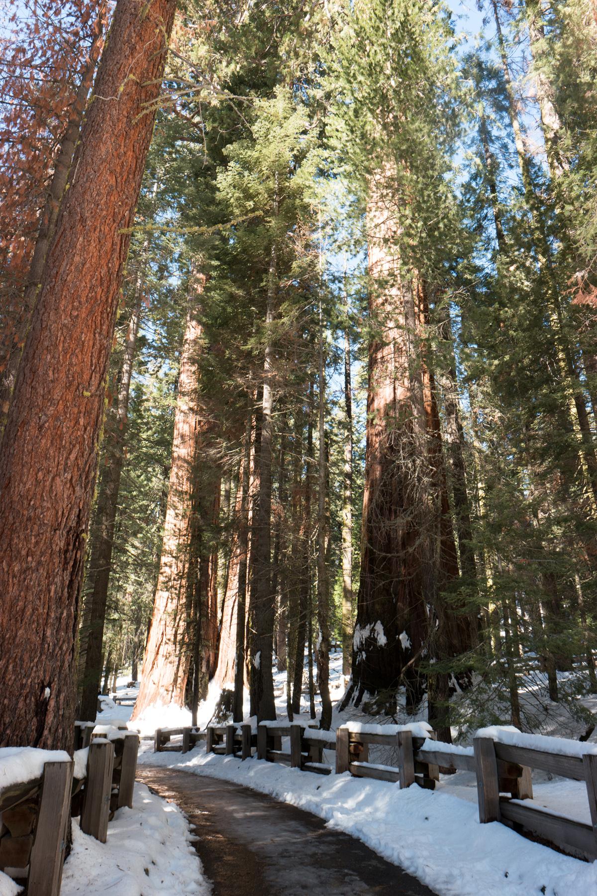 Wasim Muklashy Photography_Sequoia National Park_California_December 2015_-SAM_4585.jpg