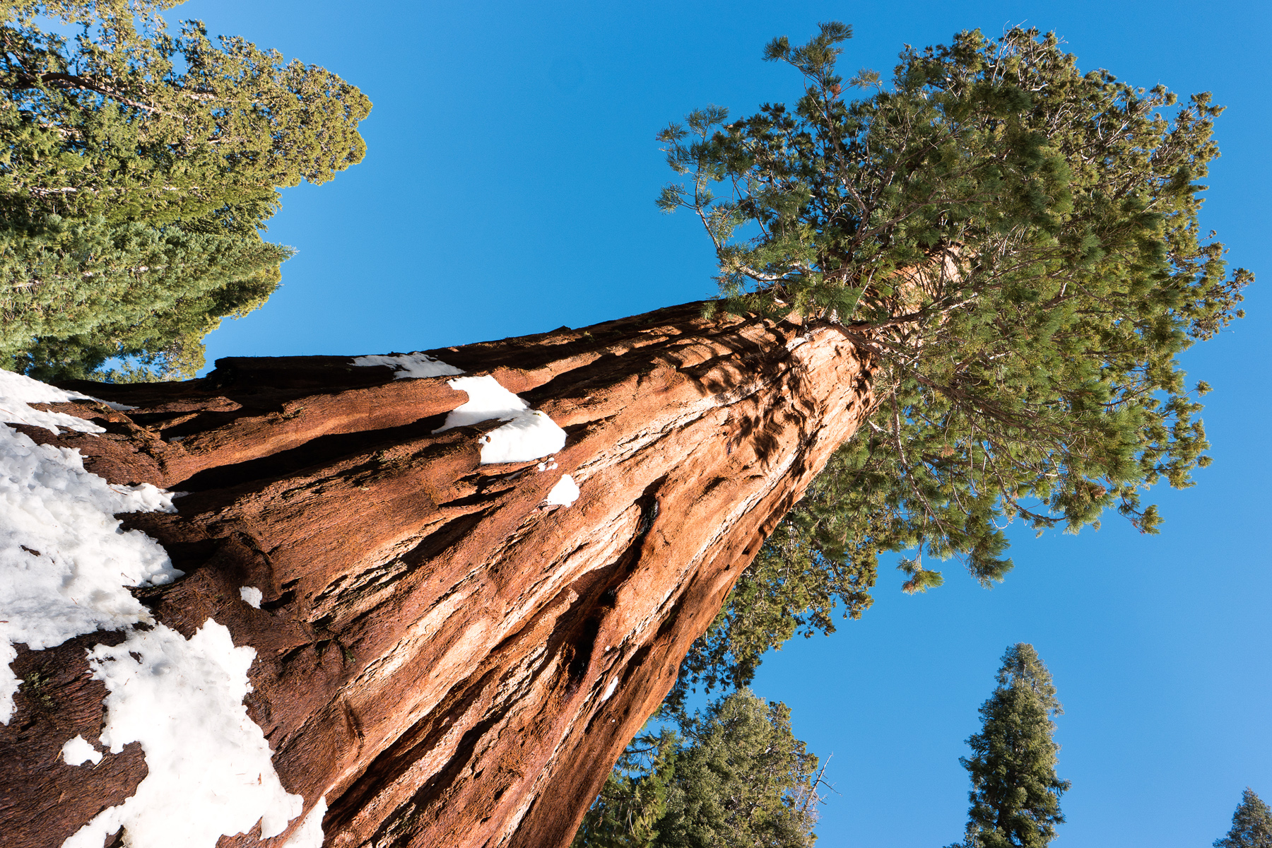 Wasim Muklashy Photography_Sequoia National Park_California_December 2015_-SAM_4582-Edit.jpg