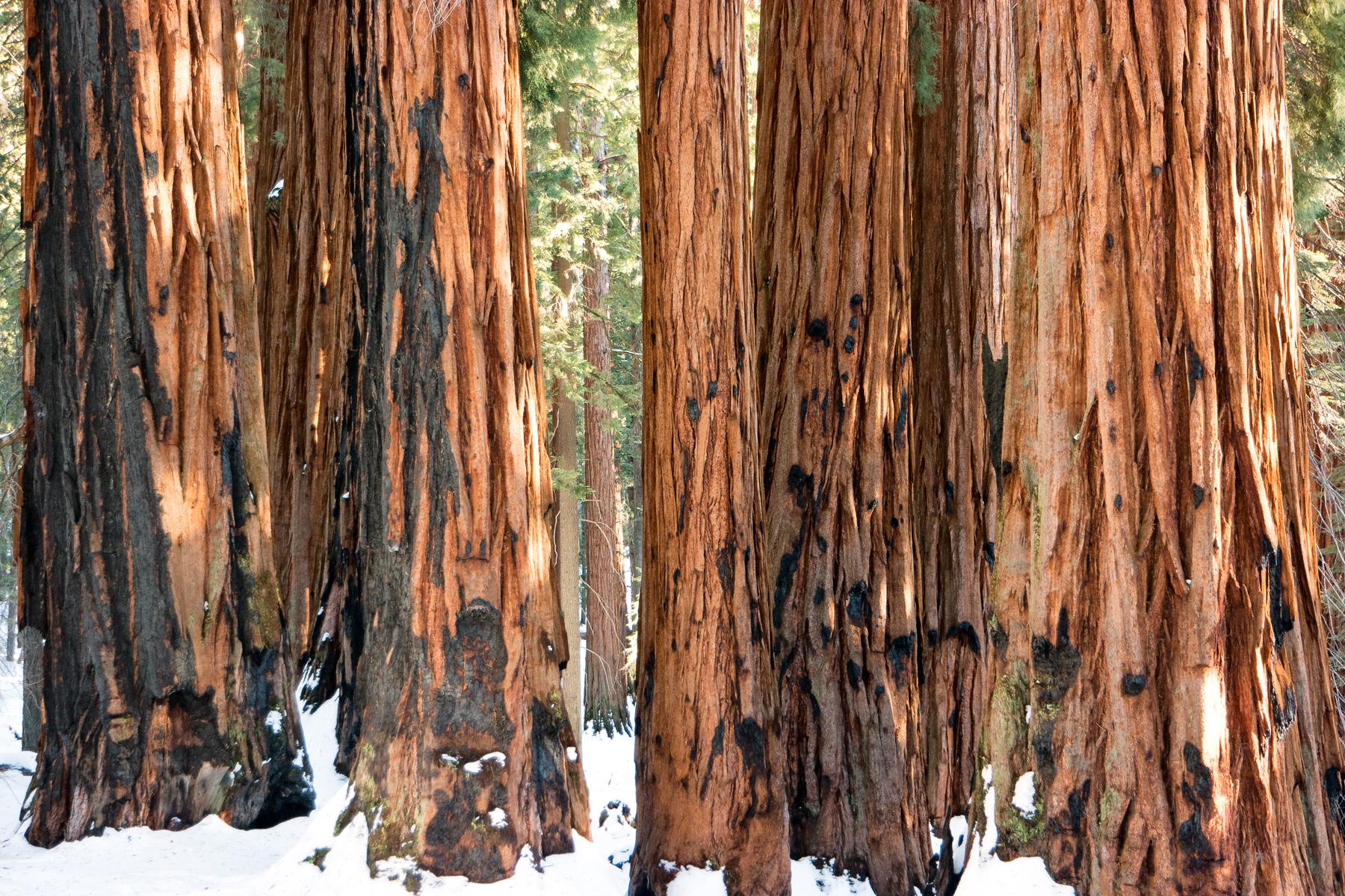 Wasim Muklashy Photography_Sequoia National Park_California_December 2015_-SAM_4644-Edit.jpg
