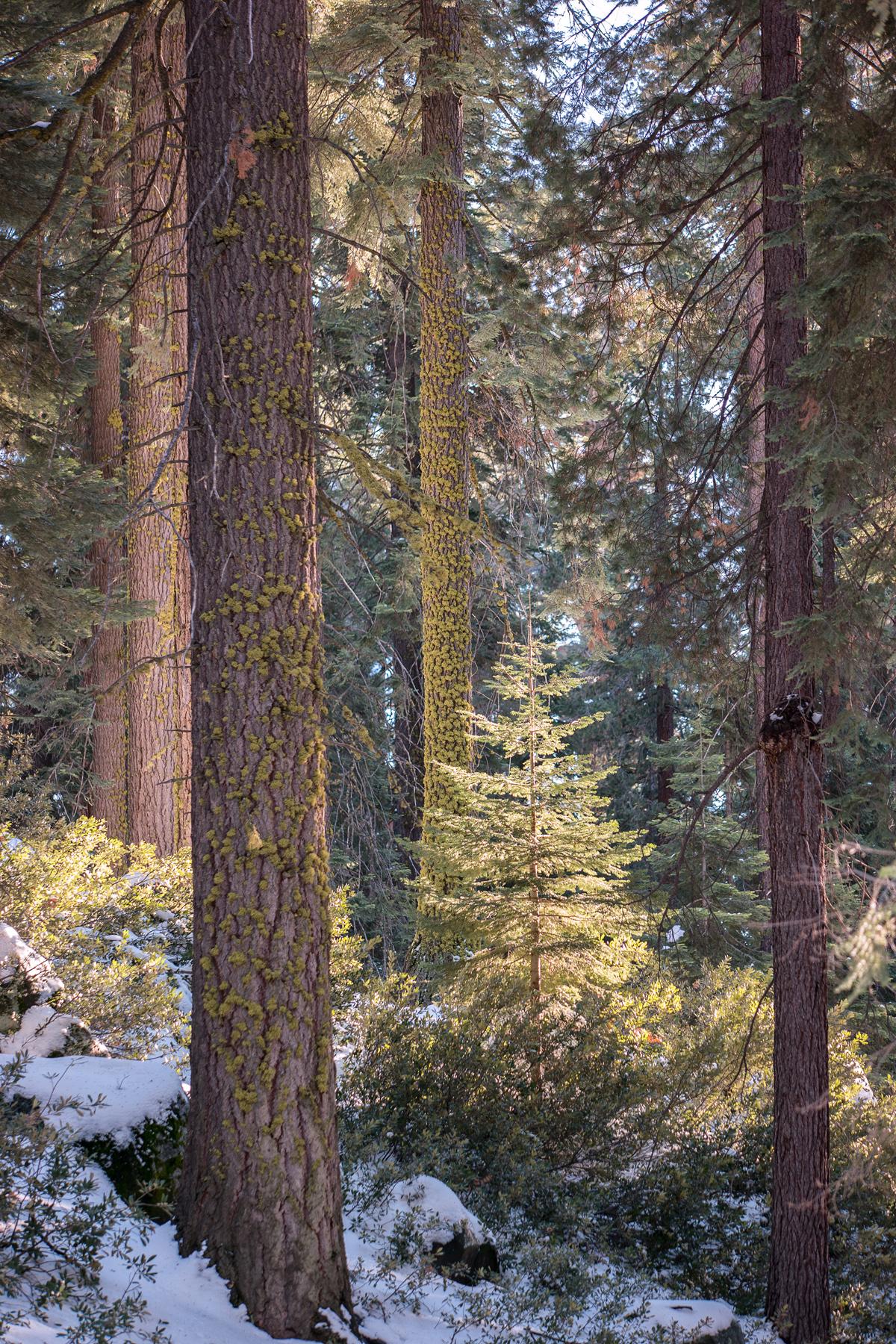 Wasim Muklashy Photography_Sequoia National Park_California_December 2015_-SAM_3974-Edit.jpg