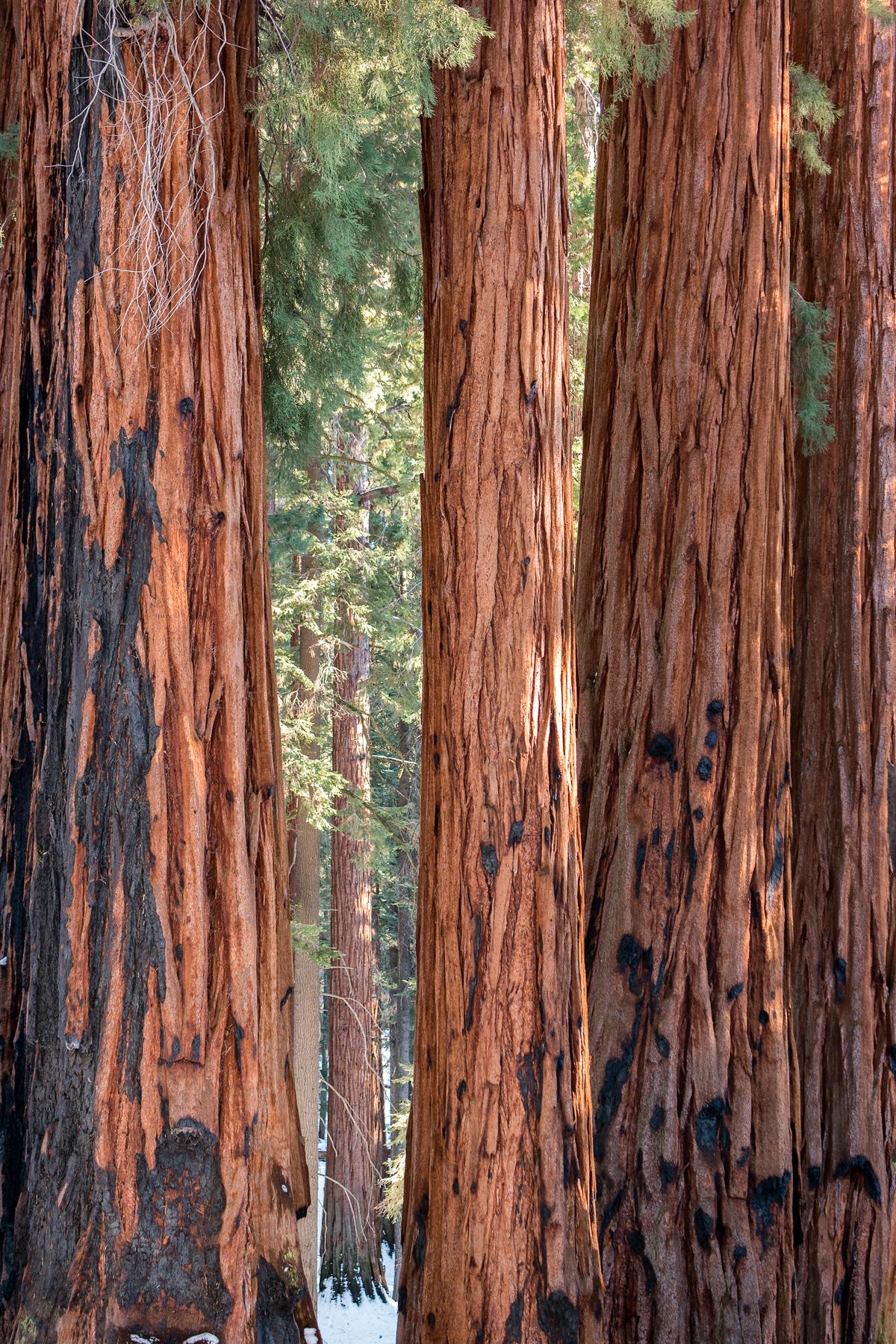 Wasim Muklashy Photography_Sequoia National Park_California_December 2015_-SAM_4014-Edit.jpg