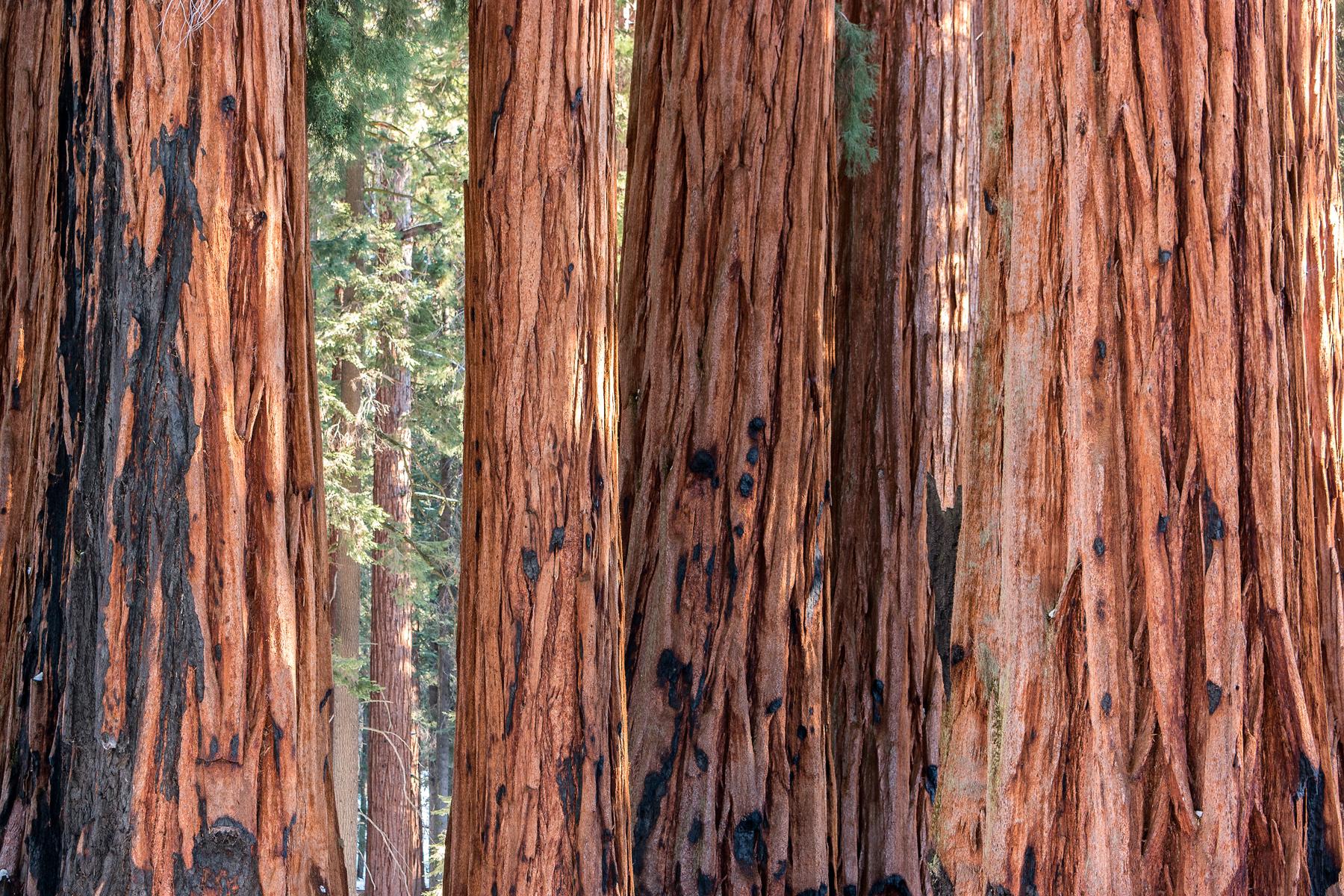 Wasim Muklashy Photography_Sequoia National Park_California_December 2015_-SAM_4019-Edit.jpg