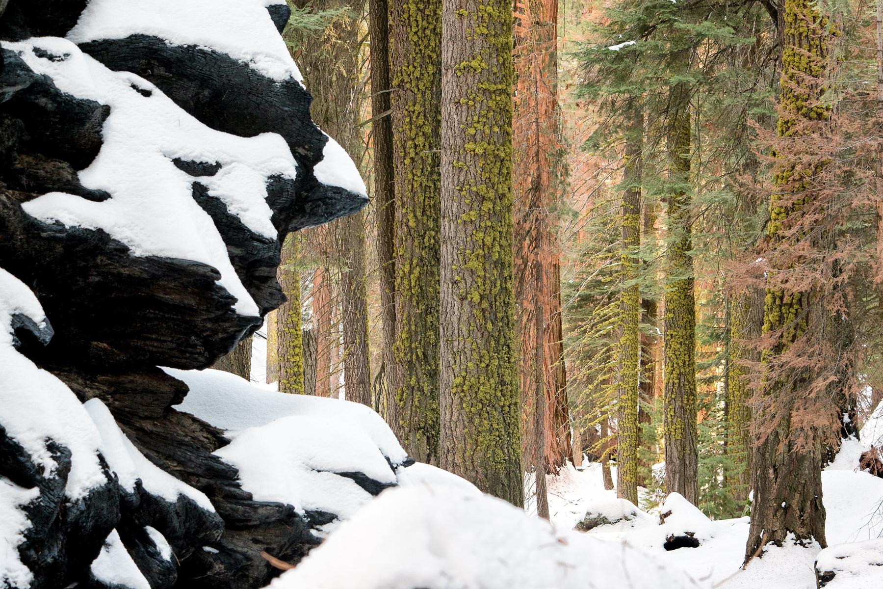 Wasim Muklashy Photography_Sequoia National Park_California_December 2015_-SAM_4048-Edit.jpg
