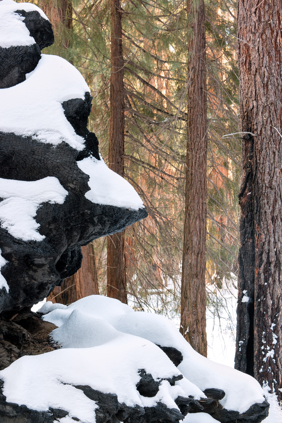 Wasim Muklashy Photography_Sequoia National Park_California_December 2015_-SAM_4052-Edit.jpg