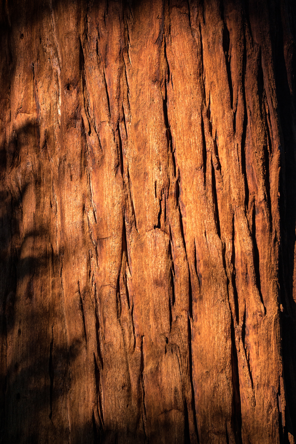 Wasim Muklashy Photography_Sequoia National Park_California_December 2015_-SAM_4064-Edit.jpg