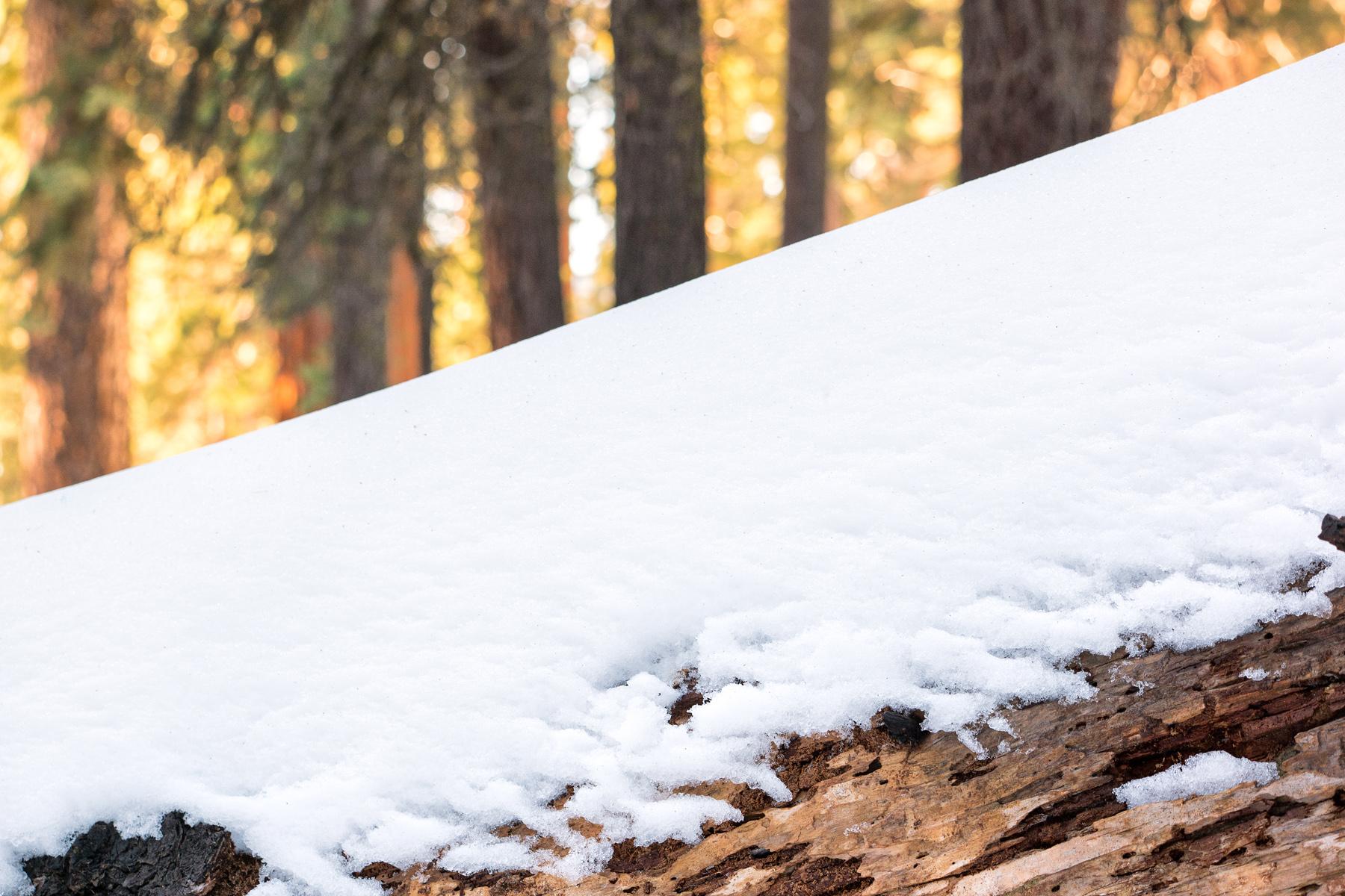 Wasim Muklashy Photography_Sequoia National Park_California_December 2015_-SAM_4127-Edit.jpg